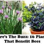 Here's The Buzz: 16 Plants That Benefit Bees