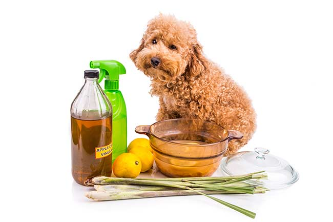 Home Remedies For Your Pets