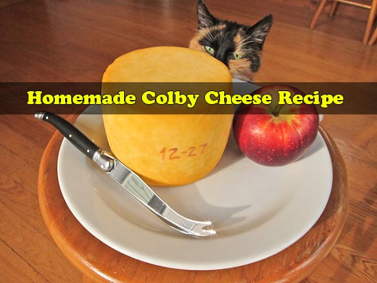 Homemade Colby Cheese Recipe
