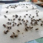 Get Rid Of Flies Naturally With Homemade Flypaper