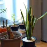 29 Air Purifying House Plants According To NASA