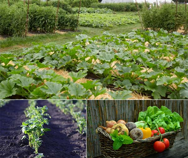 How Much Should You Plant To Provide A Year's Worth of Food