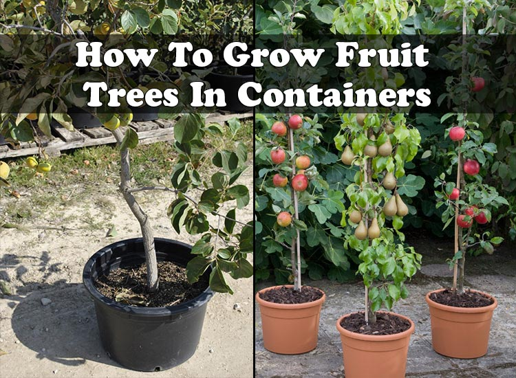 howtogrowfruittreesincontainers, Natural flower