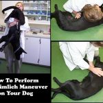 How To Perform the Heimlich Maneuver and CPR on Your Dog