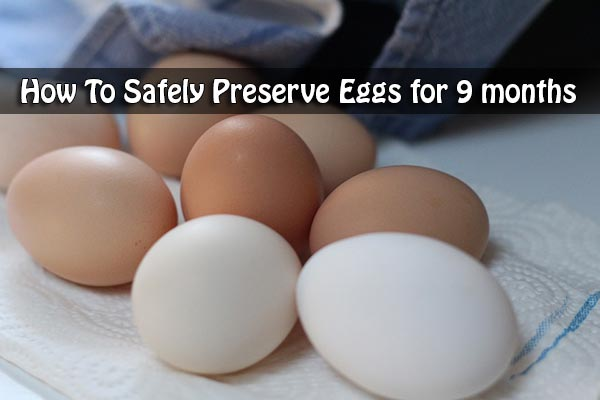 How To Safely Preserve Eggs for 9 months
