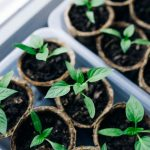 How To Grow Plants From Seeds At Home