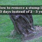 How to remove a stump in 2 – 3 days instead of 2 – 3 years
