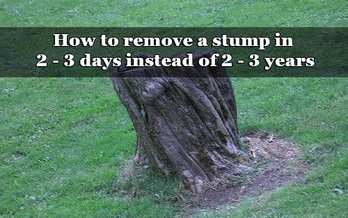 How To Remove A Stump In 2 3 Days Instead Of Years