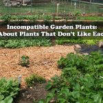 Incompatible Garden Plants: Learn About Plants That Don't Like Each Other
