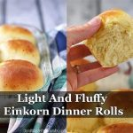 Light And Fluffy Einkorn Dinner Rolls Recipe