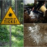 Lime to Kill Ticks
