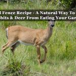 Liquid Fence Recipe - A Natural Way To Repel Rabbits & Deer From Eating Your Garden