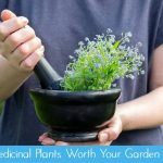 27 Medicinal Plants Worth Your Garden Space