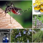 18 Natural Ways To Rid Yourself Of Mosquitoes
