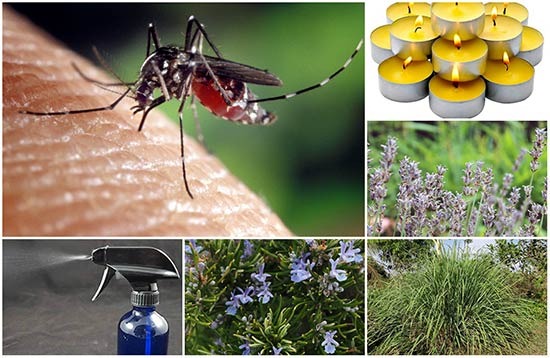 Natural Ways To Rid Yourself Of Mosquitoes
