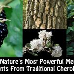 12 of Nature's Most Powerful Medicinal Plants From Traditional Cherokees