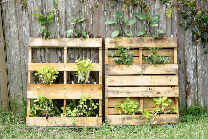 No Fuss Vegetable Pallet Garden