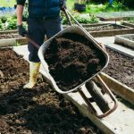 The Best Organic Fertilizers for a Vegetable Garden