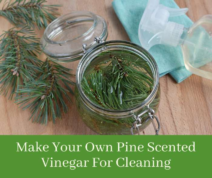 Pine Vinegar For Cleaning