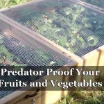 Predator Proof Your Fruits and Vegetables