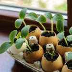 DIY Garden: Put Your Eggshells to Work!