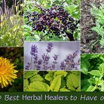 The-10-Best-Herbal-Healers-to-Have-on-Hand