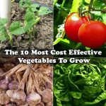 The 10 Most Cost Effective Vegetables To Grow