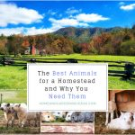 Top 5 Livestock To Keep At Your Home And Why