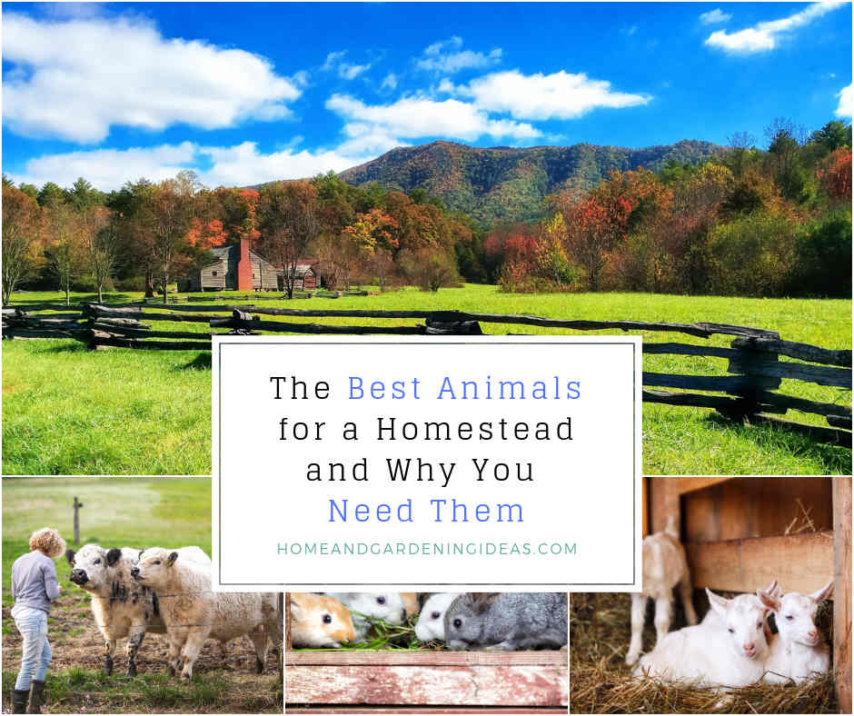 The-Best-Animals-for-a-Homestead-