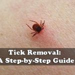 Tick Removal: A Step-by-Step Guide