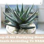 Top 15 Air Purifying House Plants According To NASA