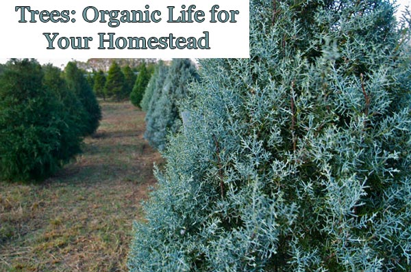 Trees: Organic Life for Your Homestead