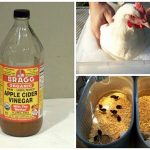 11 Uses For Apple Cider Vinegar Around The Coop