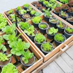 Vegetables You Can Plant In February