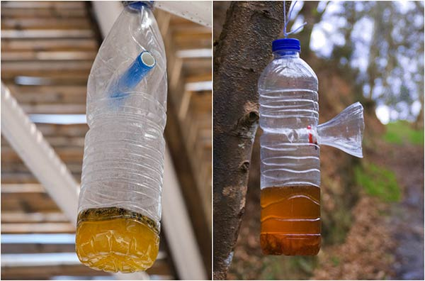 How To Make A Simple Homemade Wasp Trap