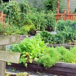 Ways To Grow More Food From Your Garden