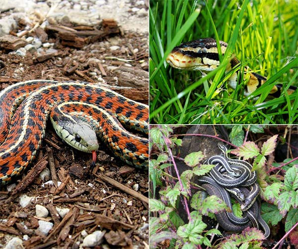 7 Ways To Snake Proof Your Home And Garden