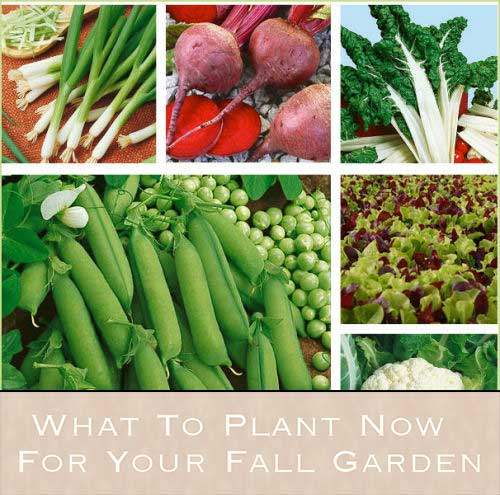 What To Plant Now For Your Fall Garden