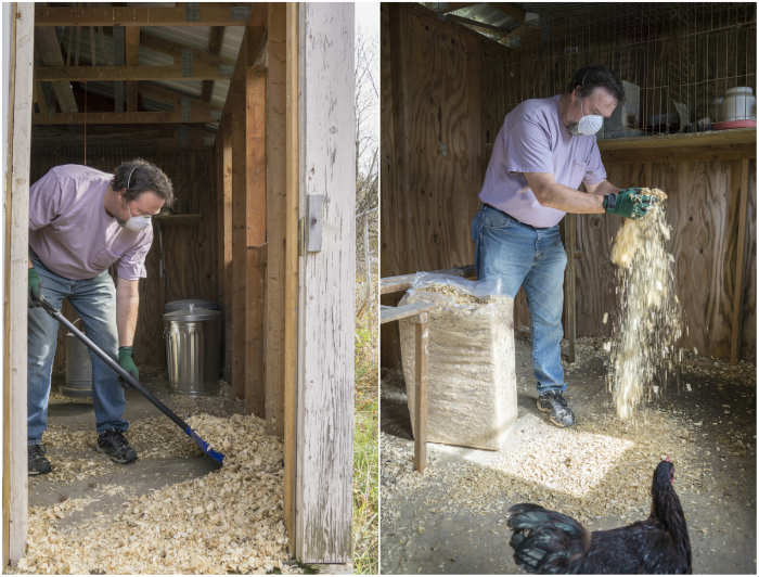How To Clean A Chicken Coop Naturally