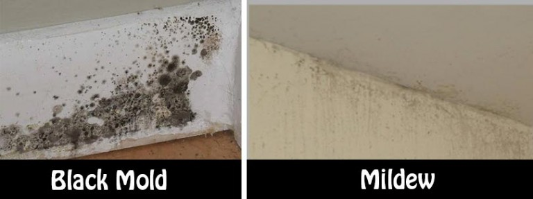 Natural and simple solutions to rid your home of mold and mildew - Natural ways remove mold ...